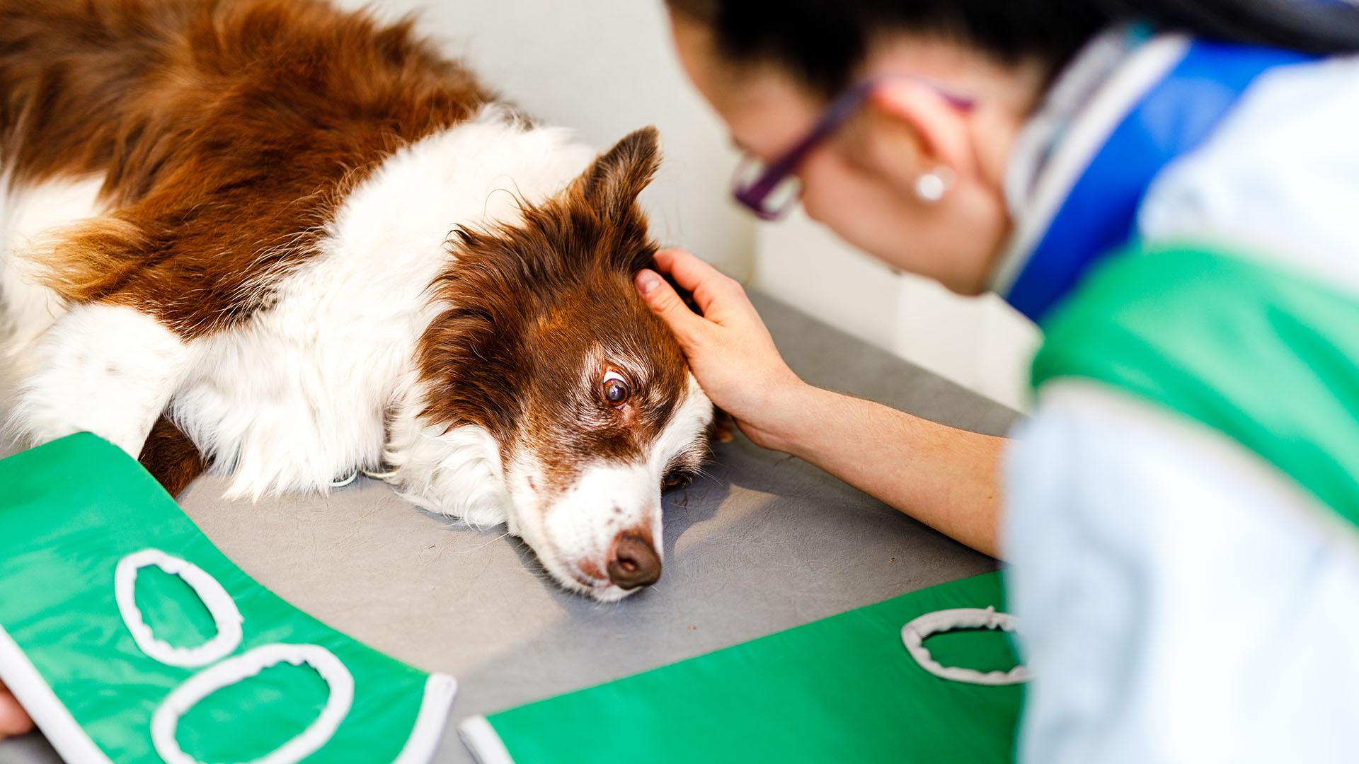 Hund beim Röntgen
