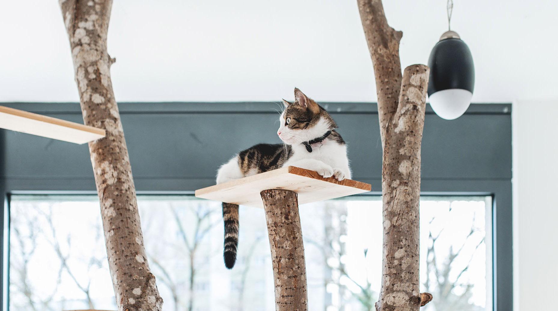 chat en haut 1