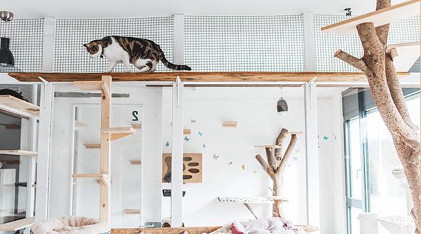 chat en haut