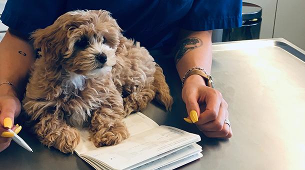Hund auf Buch
