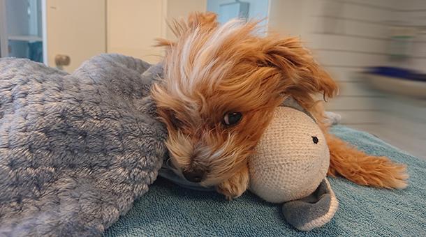 Kleiner Hund mit Ball
