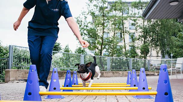 Hund Physio