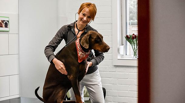Hund Untersuchung