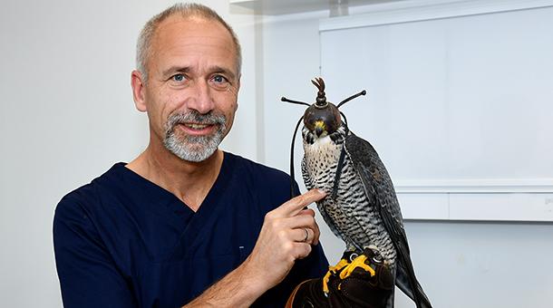 Dr. Sander mit Falke