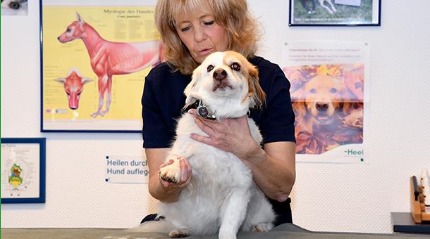 Hund Osteopathie