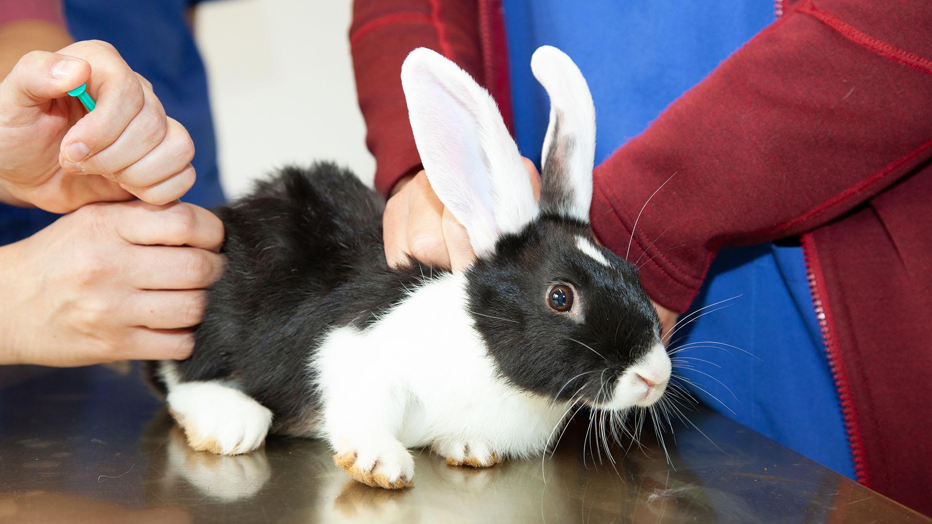 Kaninchen Untersuchung