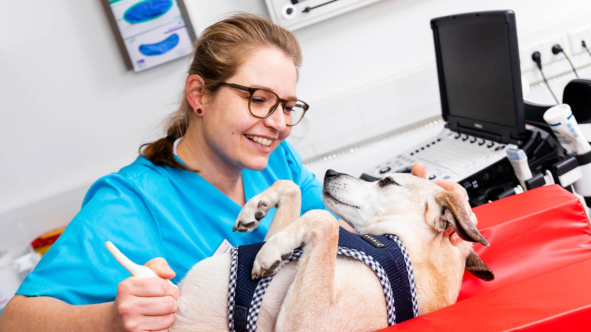 Hund bei Ultraschall
