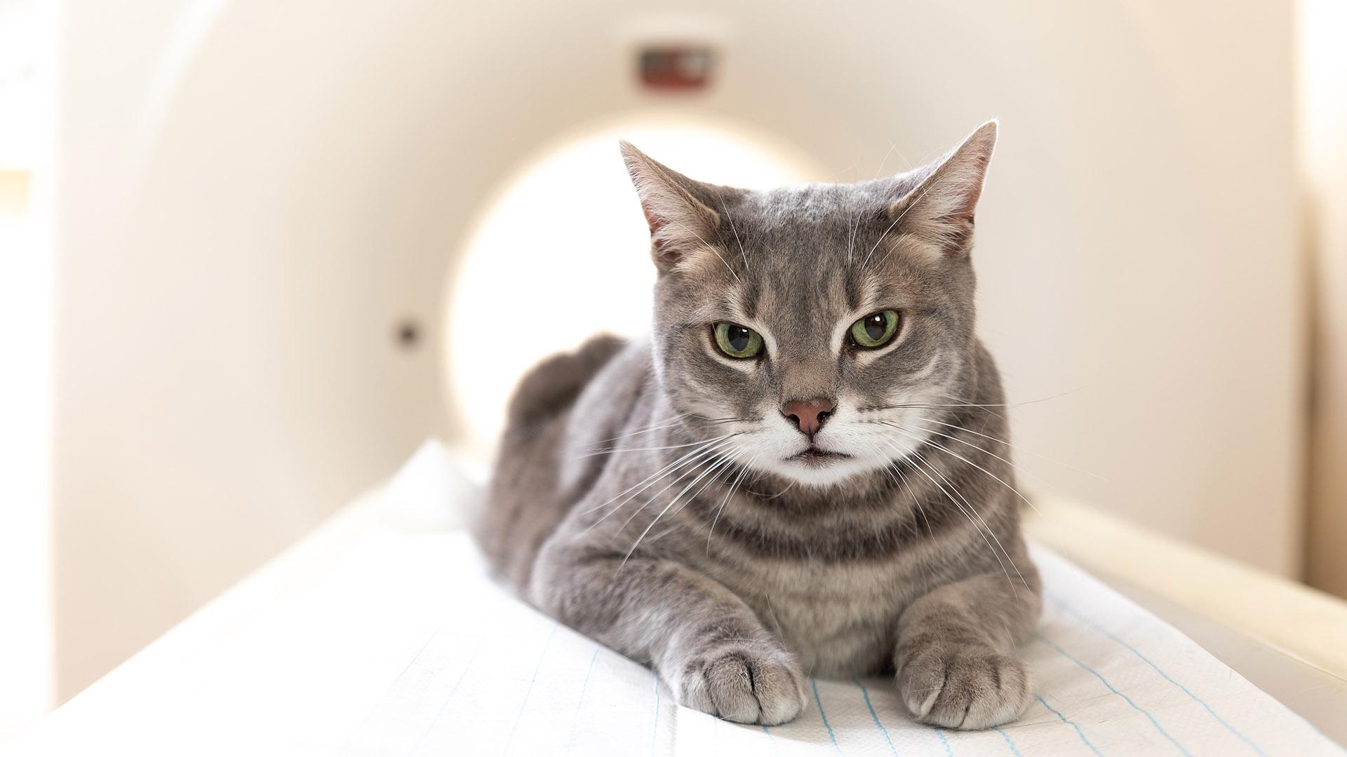 Katze MRT
