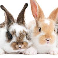 Kaninchen -