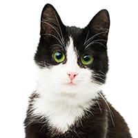 Katze -